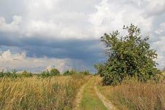 Φύση πριν από τη βροχή σε θερινό συννεφιάζω ημερησίως όμορφο διάνυσμα δέντρων απεικόνισης μήλων Τοπίο χώρας Στοκ Εικόνες