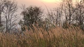 Φύση πρωινού πριν από την ανατολή απόθεμα βίντεο