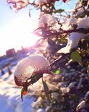 Φύση, πόλη, χειμώνας, χιόνι, πάγος, Στοκ φωτογραφία με δικαίωμα ελεύθερης χρήσης