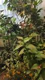 Φύση σημείων πεταλούδων όμορφη στοκ φωτογραφία