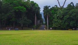 Φύση Σρι Λάνκα της Ασίας κήπων Στοκ εικόνα με δικαίωμα ελεύθερης χρήσης