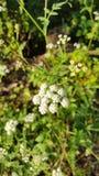 Φύση στα βουνά pyrinees Στοκ Εικόνες