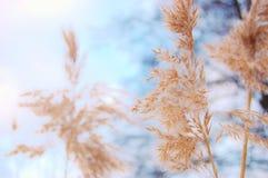 Φύση στη σουηδική λίμνη Στοκ φωτογραφίες με δικαίωμα ελεύθερης χρήσης