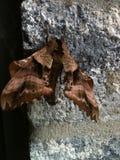 Φύση στο βήμα πορτών σας Στοκ Εικόνες