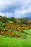 Φύση στο Λοχ Νες στη Σκωτία Στοκ Φωτογραφίες