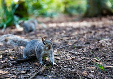 Φύση στο πάρκο Στοκ Φωτογραφίες