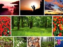 φύση συλλογής Στοκ φωτογραφία με δικαίωμα ελεύθερης χρήσης