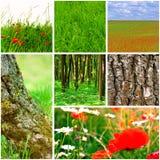 φύση συλλογής Στοκ Εικόνα