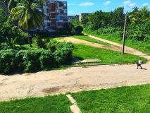 Φύση της Κούβας Στοκ εικόνα με δικαίωμα ελεύθερης χρήσης