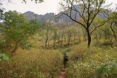 Φύση της περιόδου ανομβρίας ιχνών τροπικών δασών λόφων, πεζοπορώ τουριστών στην κορυφή του βουνού, Chiang Mai, Ταϊλάνδη 0.2018 Φε Στοκ Εικόνα