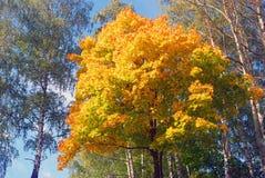Φύση της πόλης Ples, της Ρωσίας, και του ποταμού του Βόλγα μπλε μακρύς ουρανός σκιών φύσης φθινοπώρου Στοκ φωτογραφία με δικαίωμα ελεύθερης χρήσης