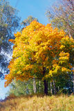 Φύση της πόλης Ples, της Ρωσίας, και του ποταμού του Βόλγα μπλε μακρύς ουρανός σκιών φύσης φθινοπώρου Στοκ Εικόνες