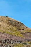 Φύση της Σκωτίας spirng Στοκ Εικόνες