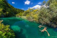 Φύση της Virgin του εθνικού πάρκου λιμνών Plitvice, Κροατία Στοκ Φωτογραφία