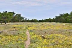 Φύση, τοπίο και δασικό λιβάδι στοκ εικόνες με δικαίωμα ελεύθερης χρήσης