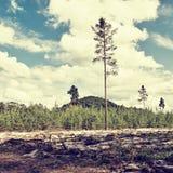 Φύση του τσεχικού εδάφους Macha ` s περιοχής τουριστών με το πεύκο και του λόφου Borny στις καλοκαιρινές διακοπές Στοκ φωτογραφίες με δικαίωμα ελεύθερης χρήσης