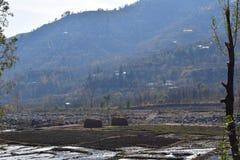 Φύση του swat στοκ εικόνες με δικαίωμα ελεύθερης χρήσης
