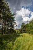 Φύση το καλοκαίρι Στοκ Εικόνες