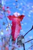 Φύση το φθινόπωρο, έδαφος Altai, δυτική Σιβηρία, Ρωσία Στοκ εικόνες με δικαίωμα ελεύθερης χρήσης