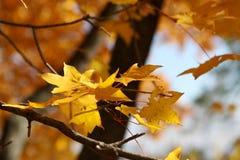 Φύση το φθινόπωρο, έδαφος Altai, δυτική Σιβηρία, Ρωσία Στοκ Φωτογραφία
