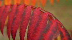 Φύση το φθινόπωρο φιλμ μικρού μήκους