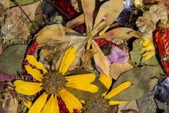 Φύση το φθινόπωρο Στοκ Φωτογραφία