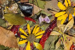 Φύση το φθινόπωρο Στοκ φωτογραφία με δικαίωμα ελεύθερης χρήσης