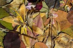 Φύση το φθινόπωρο Στοκ εικόνες με δικαίωμα ελεύθερης χρήσης
