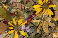 Φύση το φθινόπωρο Στοκ Εικόνες