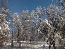 Φύση το χειμώνα, μετά από τις χιονοπτώσεις, δέντρα στις νιφάδες χιονιού Στοκ Εικόνα