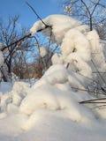 Φύση το χειμώνα, μετά από τις χιονοπτώσεις, κολλώντας χιόνι σε έναν κλάδο Στοκ φωτογραφία με δικαίωμα ελεύθερης χρήσης