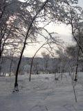 Φύση το χειμώνα, μετά από τις χιονοπτώσεις, που περιμένουν τις χιονοθύελλες Στοκ φωτογραφία με δικαίωμα ελεύθερης χρήσης