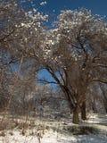 Φύση το χειμώνα, μετά από τις χιονοπτώσεις, τα δέντρα και τους Μπους, μετά από μια χιονοθύελλα Στοκ Εικόνες