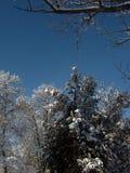 Φύση το χειμώνα, μετά από τις χιονοπτώσεις, τα χιονισμένα δέντρα Στοκ φωτογραφία με δικαίωμα ελεύθερης χρήσης