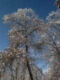 Φύση το χειμώνα, μετά από τις χιονοπτώσεις, τα χιονοσκεπή δέντρα, μπλε ουρανός Στοκ Εικόνα