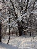 Φύση το χειμώνα, μετά από τις χιονοπτώσεις, τη χιονισμένη δασική πορεία Στοκ Εικόνες