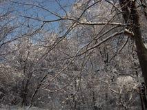 Φύση το χειμώνα, μετά από τις χιονοπτώσεις, το χιονισμένο δασικό αλσύλλιο Στοκ Εικόνα