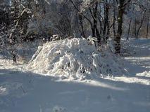 Φύση το χειμώνα, μετά από τις χιονοπτώσεις, το χιονισμένο Μπους Στοκ Εικόνα