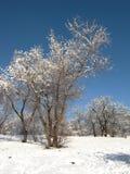 Φύση το χειμώνα, μετά από τις χιονοπτώσεις, το χιονισμένο χορτοτάπητα Στοκ Εικόνες