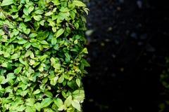 Φύση υποβάθρου Στοκ εικόνες με δικαίωμα ελεύθερης χρήσης