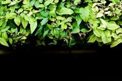 Φύση υποβάθρου Στοκ Φωτογραφίες