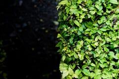 Φύση υποβάθρου Στοκ Εικόνες