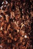 Φύση Φεβρουάριος σύστασης χειμερινών φύλλων Στοκ φωτογραφία με δικαίωμα ελεύθερης χρήσης