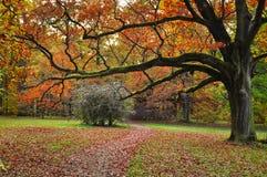 Φύση φθινοπώρου δέντρων Στοκ εικόνες με δικαίωμα ελεύθερης χρήσης