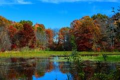 Φύση φθινοπώρου, τοπίο με τις σημύδες στην ακτή της δασικής λίμνης Στοκ εικόνα με δικαίωμα ελεύθερης χρήσης