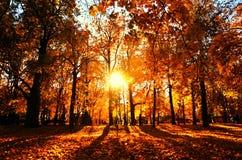 Φύση φθινοπώρου του πάρκου Kolomenskoye στη Μόσχα στοκ εικόνες