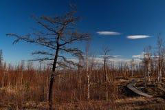 Φύση φθινοπώρου του Taimyr Norilsk στοκ φωτογραφία