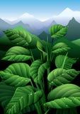 φύση φρεσκάδας Στοκ Εικόνες