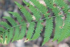 Φύση φρούτων περιοχών Ismayilly Talistan φτερών στοκ φωτογραφία