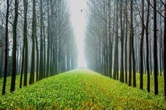 Φύση, φυσική Στοκ Εικόνες